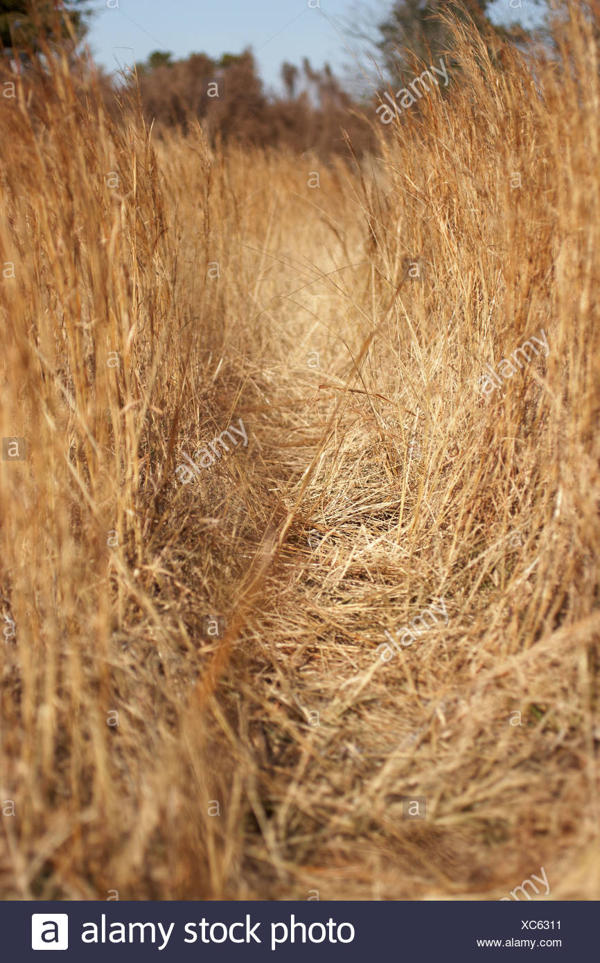 View through dry grass - Stock Image
