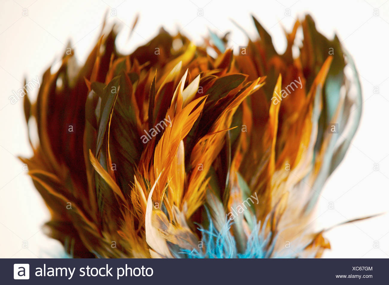 Bunch of plumes - Stock Image