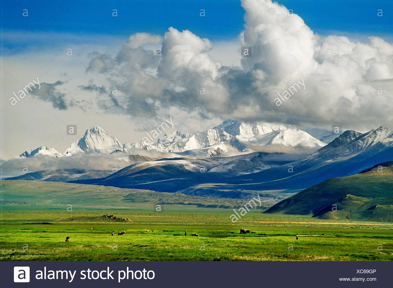 View from Tingri  From the left to the right Cho-Oyu 8400 meters, Pumori 6 800 meters and Chabran 7 300 meters  Tibet  China. - Stock Image