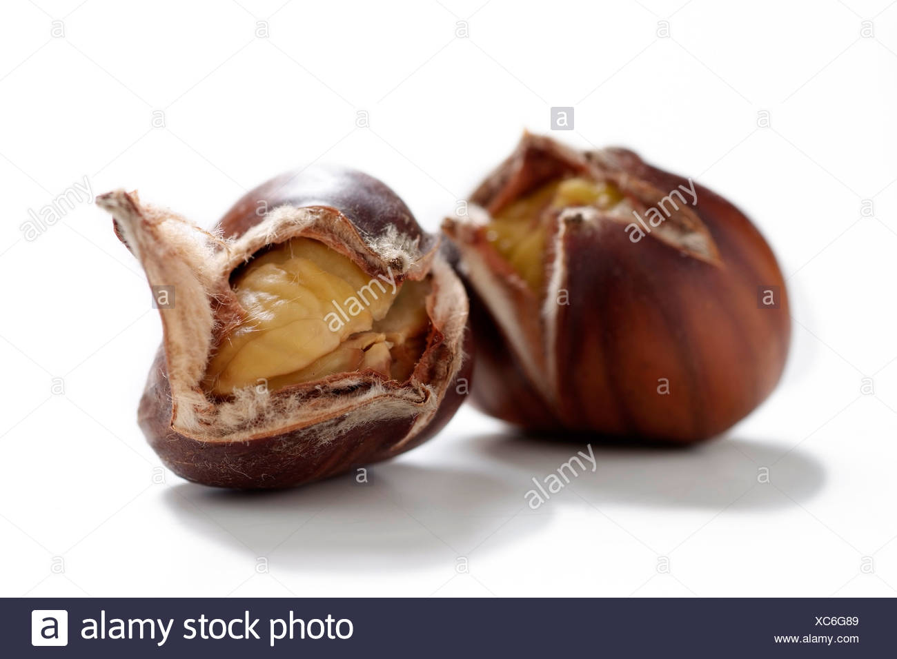 Single sweet chestnut - Stock Image