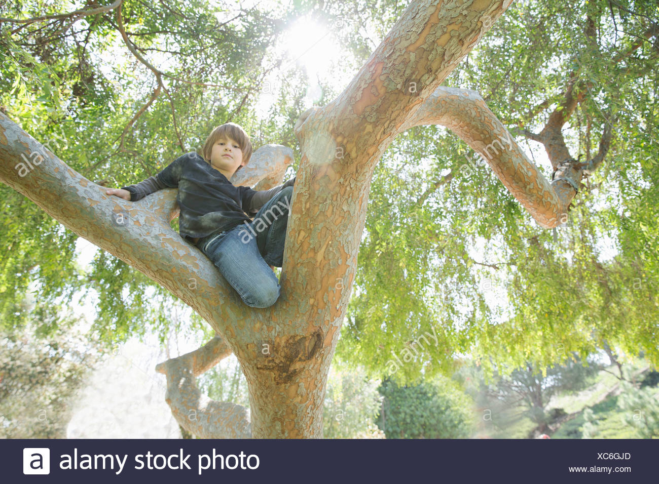Boy hiding in tree and looking down - Stock Image
