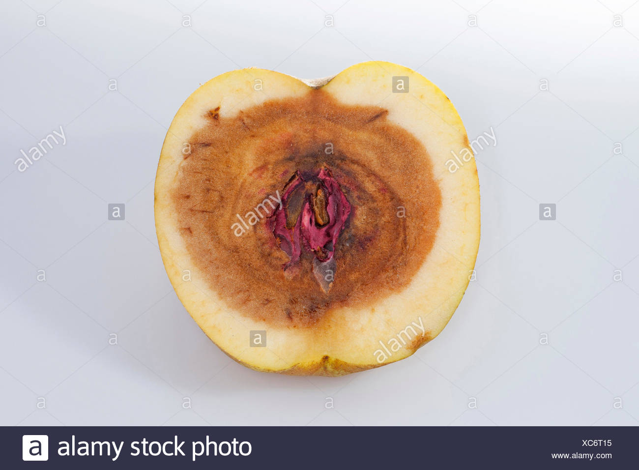 apple (Malus domestica), apple with rotten core, caused by fusarium - Stock Image