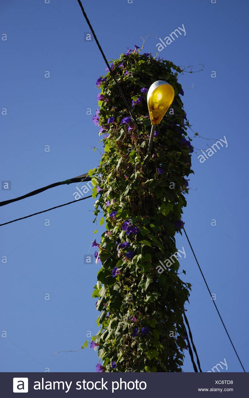 The spanish way of light masts, Port de Soller, Majorca, Spain - Stock Image