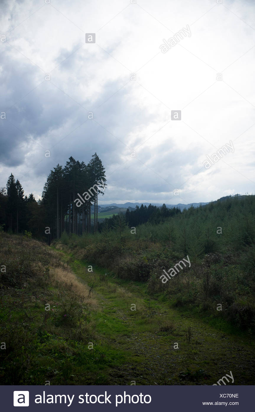 Spruces on mountain in front of a hill landscpae - Stock Image
