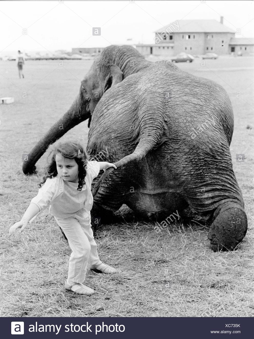 Girl pulls elephant on tail, England, Great Britain Stock Photo