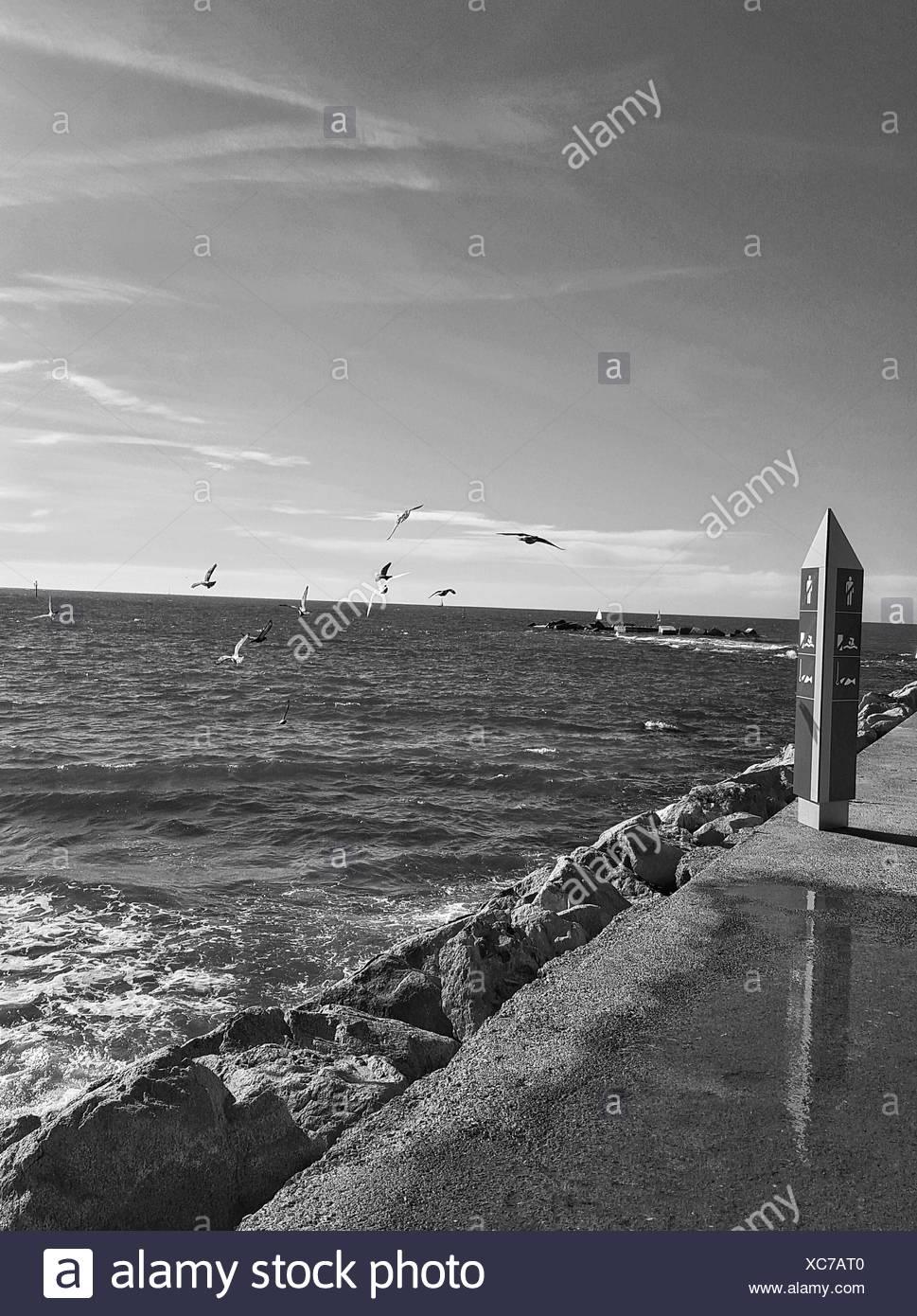 Flock Of Birds Flying Over Sea Against Sky Stock Photo