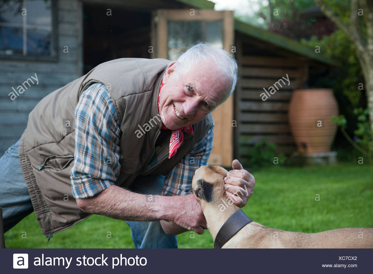Senior man, stroking pet dog in garden - Stock Image