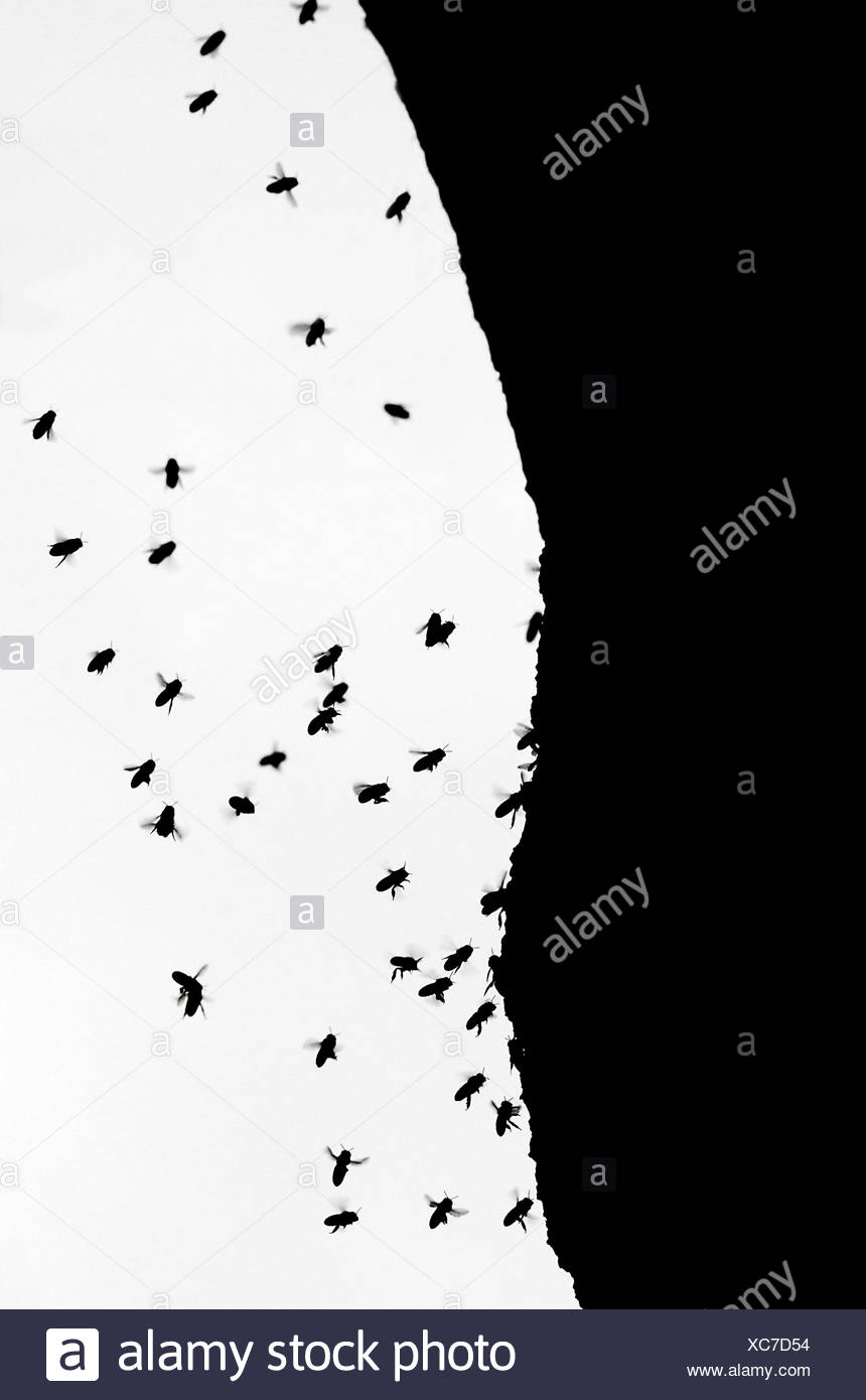 Silhouetted Wild Bees Swarming Around Tree Trunk - Stock Image