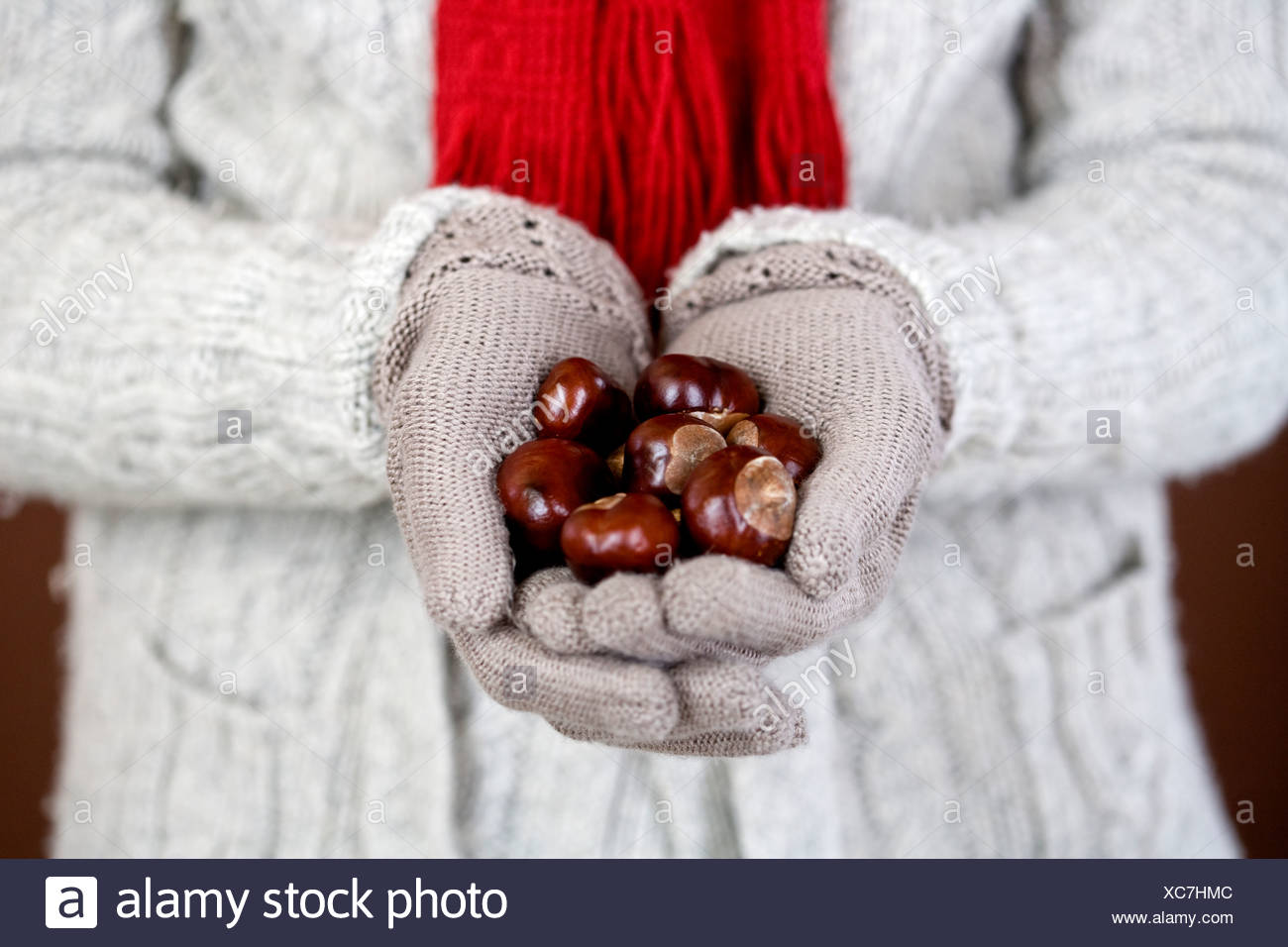 A woman holding a handful of conkers - Stock Image