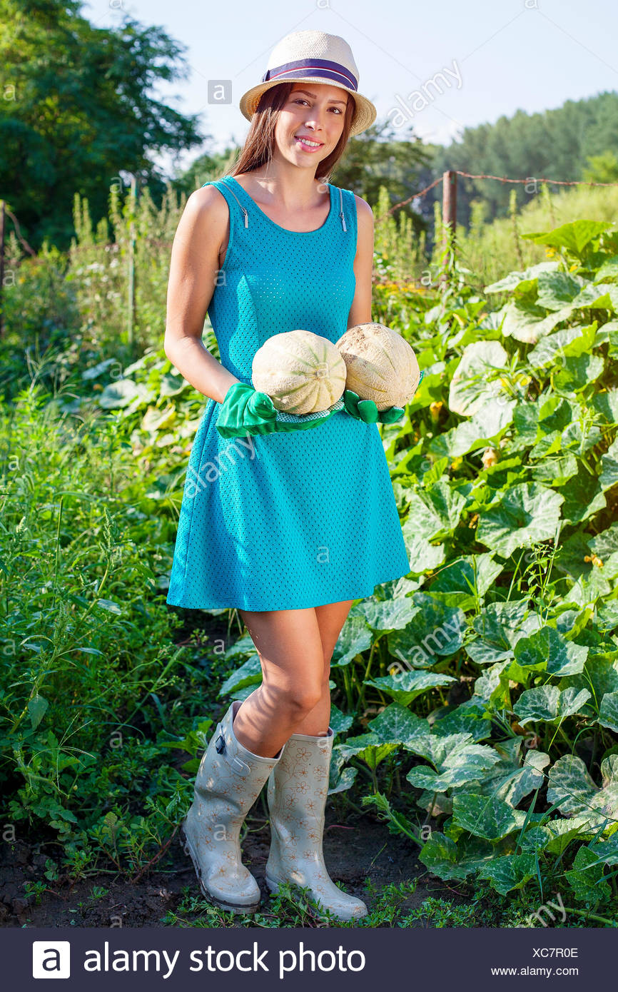 Young woman harvesting pumpkins - Stock Image