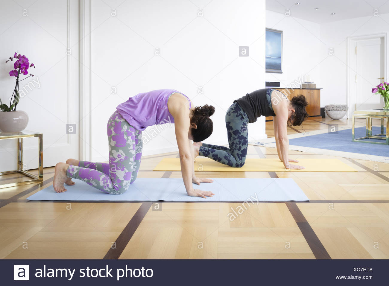 two women doing yoga at home cat pose - Stock Image