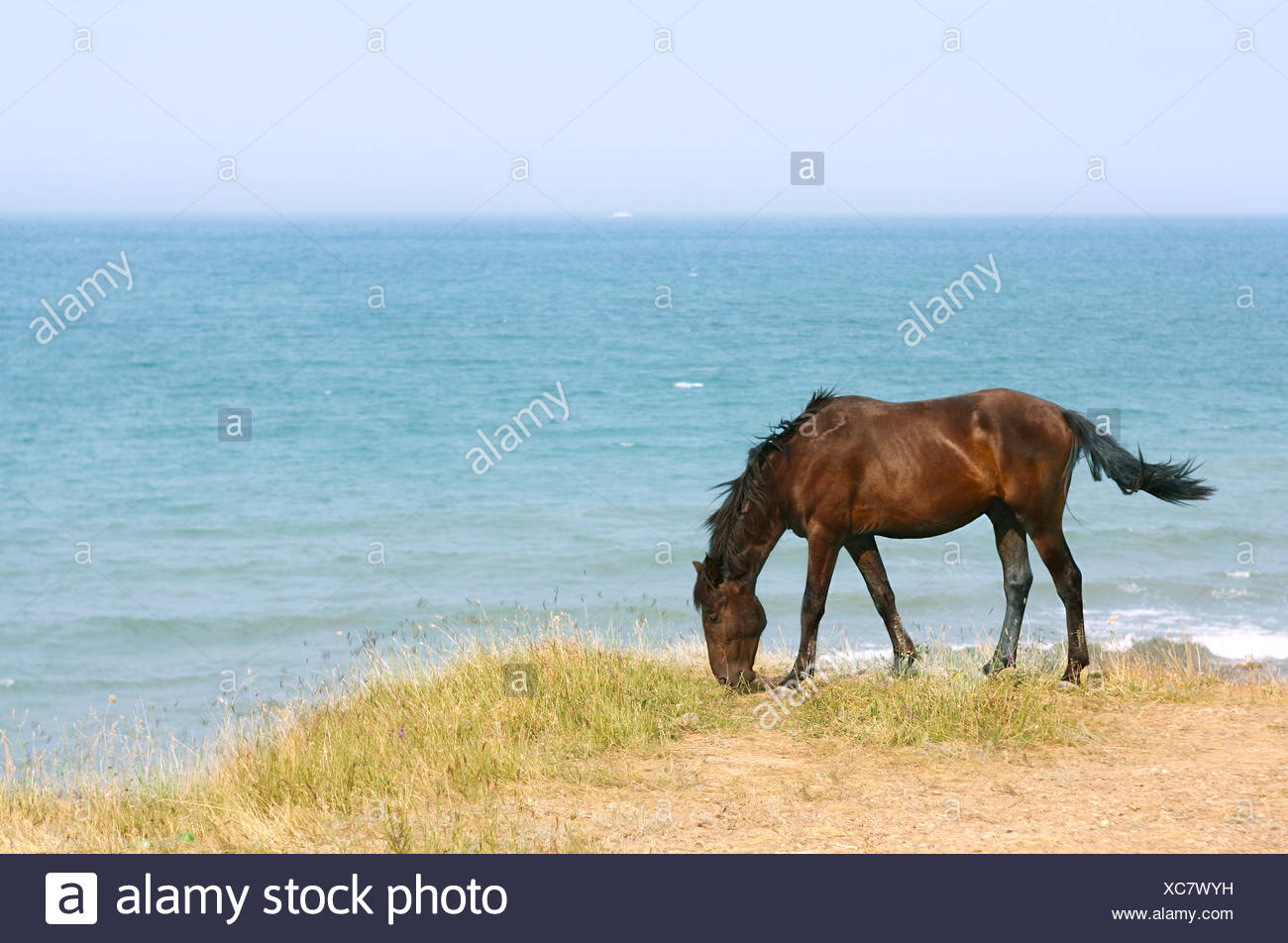 Horse on the beach - Stock Image