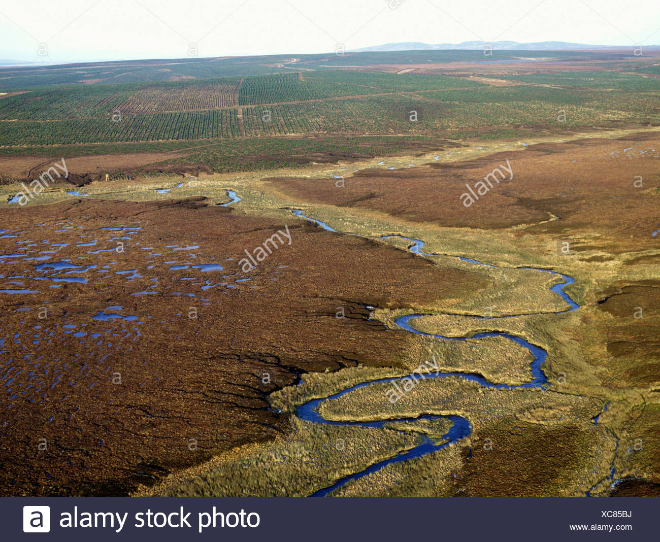Peatland Threatened by Blanket Conifer Planting Stock Photo