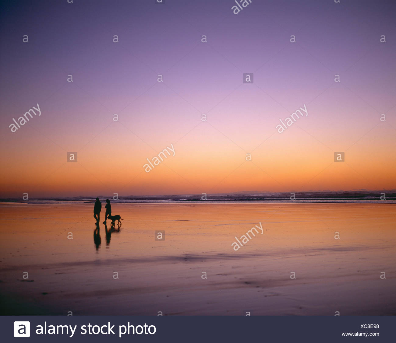 New Zealand. North Island. Auckland Region. Couple walking the dog along Piha Beach at dusk. Stock Photo