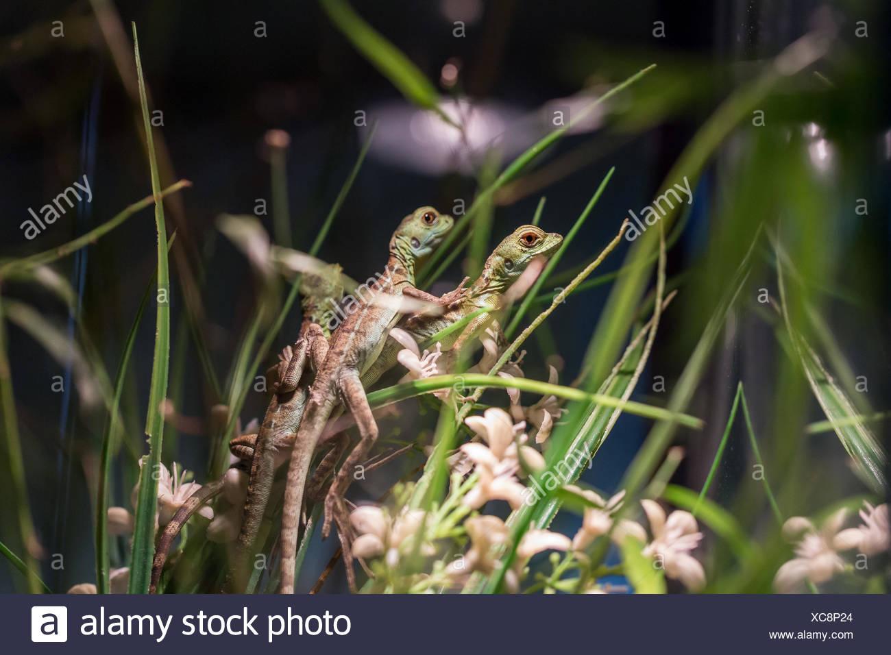 Small Lizard In Terrarium For Home Decor Stock Photo 282934684 Alamy