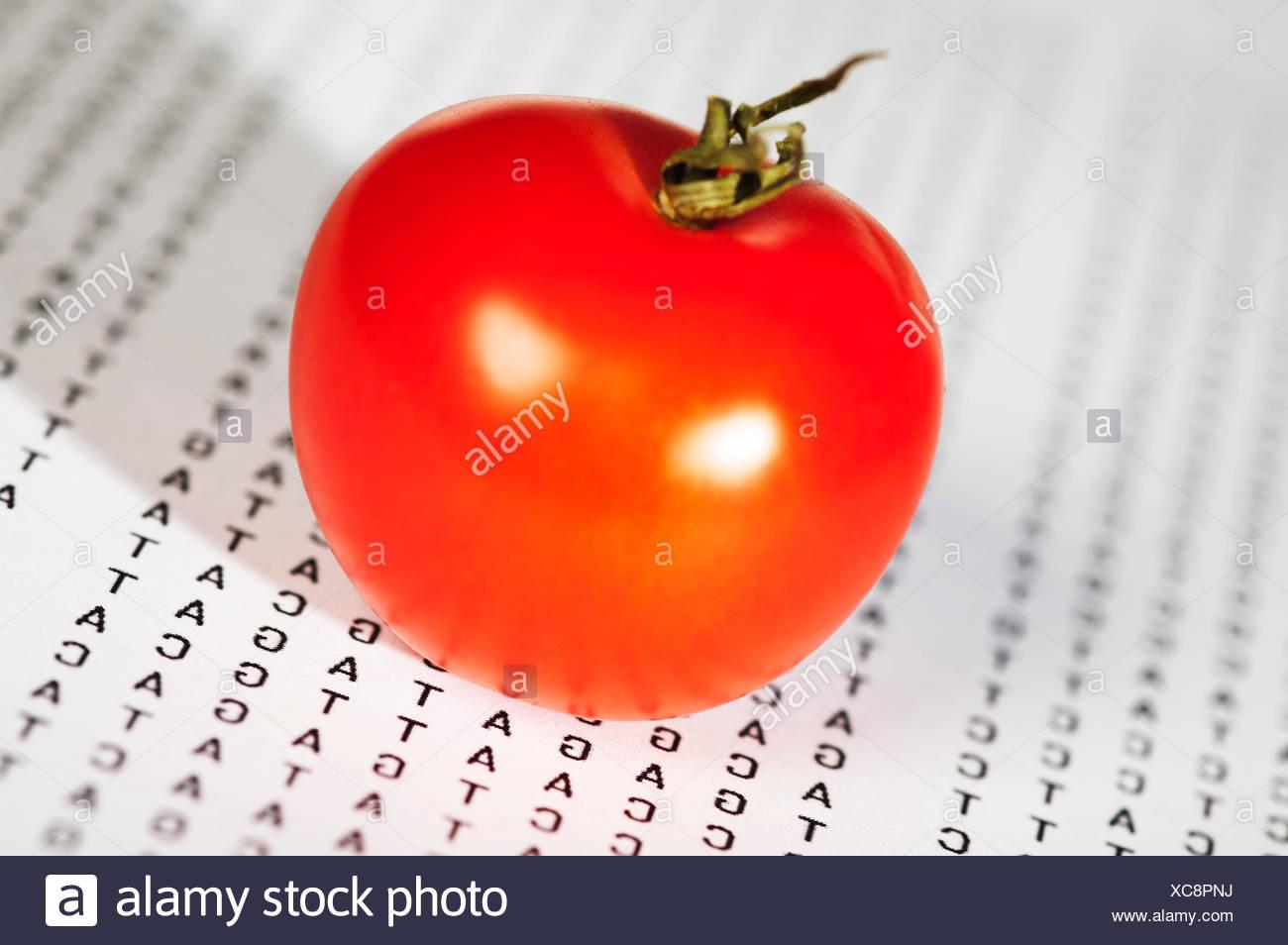 genetically modified food - Stock Image