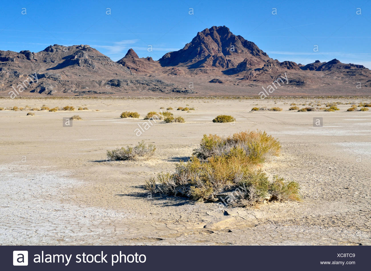 Salt flats at the Bonneville Speedway, Great Salt Lake Desert, Silver Island Mountains at back, Wendover, Utah, USA - Stock Image