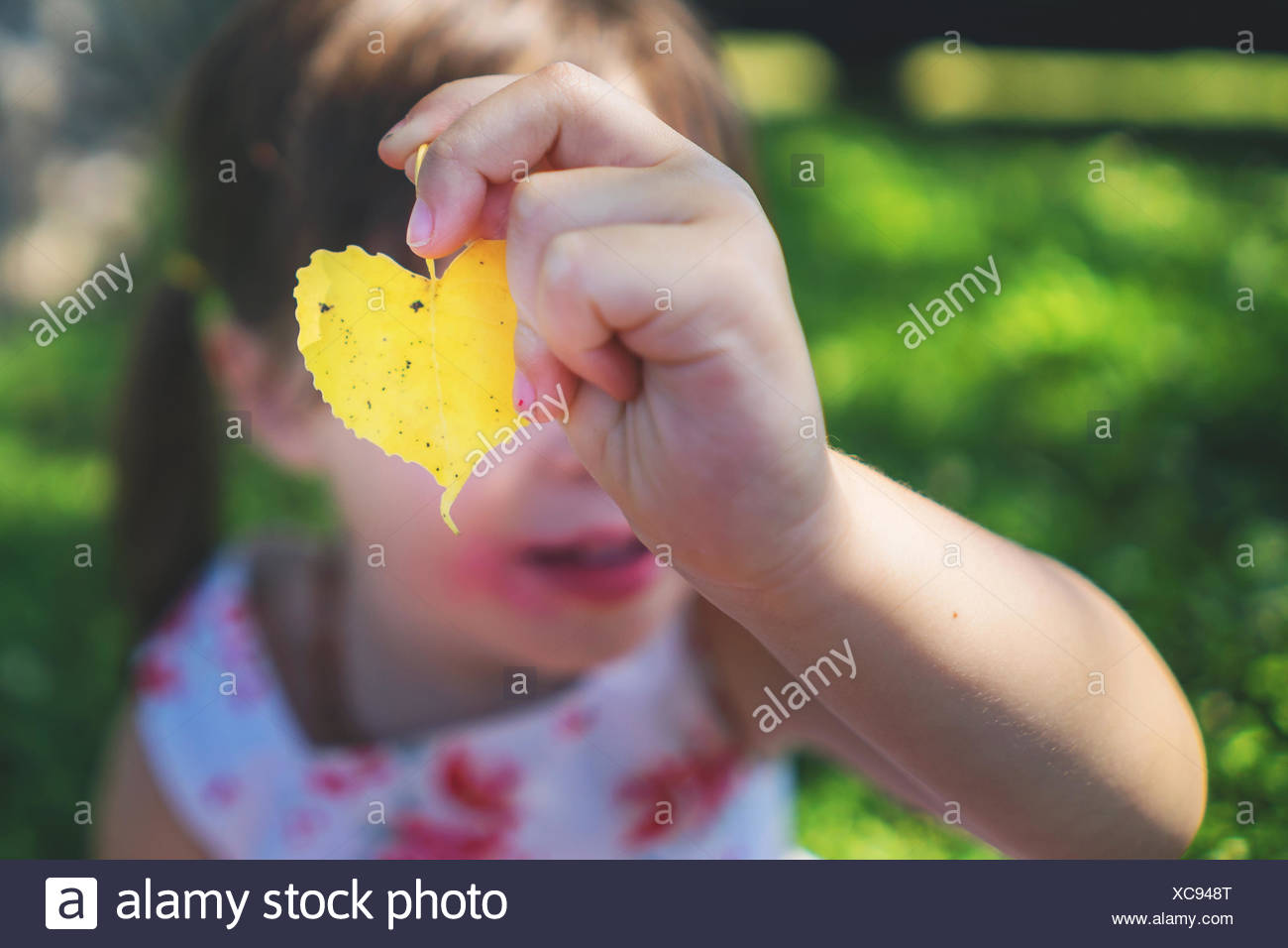 Girl holding a heart shaped leaf in front of her face - Stock Image