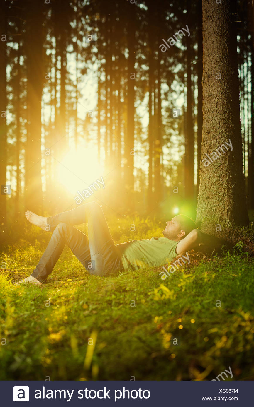 Man sleeping by tree in spruce forest - Stock Image