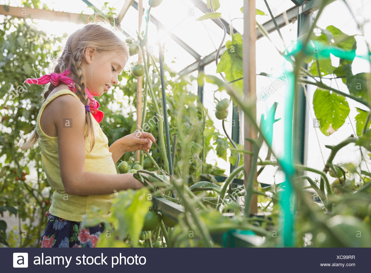 Side view of girl analyzing plants in greenhouse - Stock Image