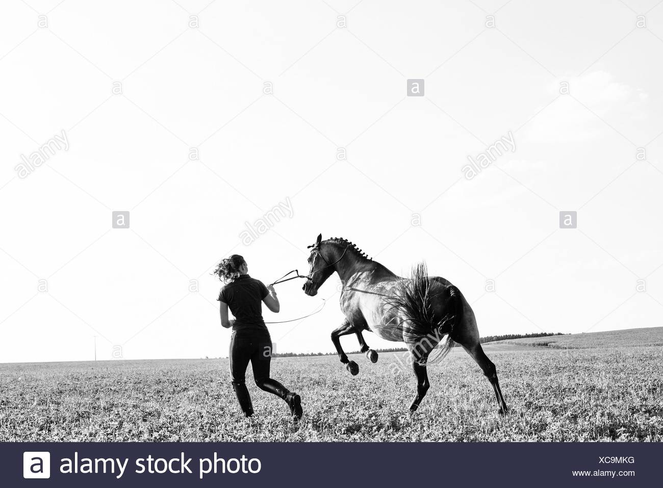 B&W image of woman training rearing horse in field - Stock Image