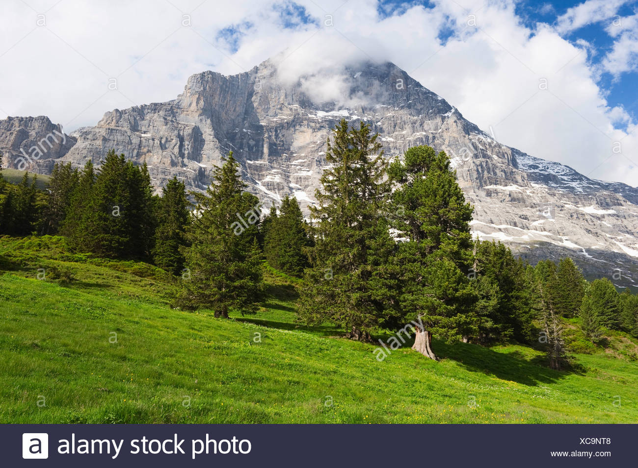 Protective forest at the foot of the Eiger, Grindelwald, Switzerland, Europe Stock Photo