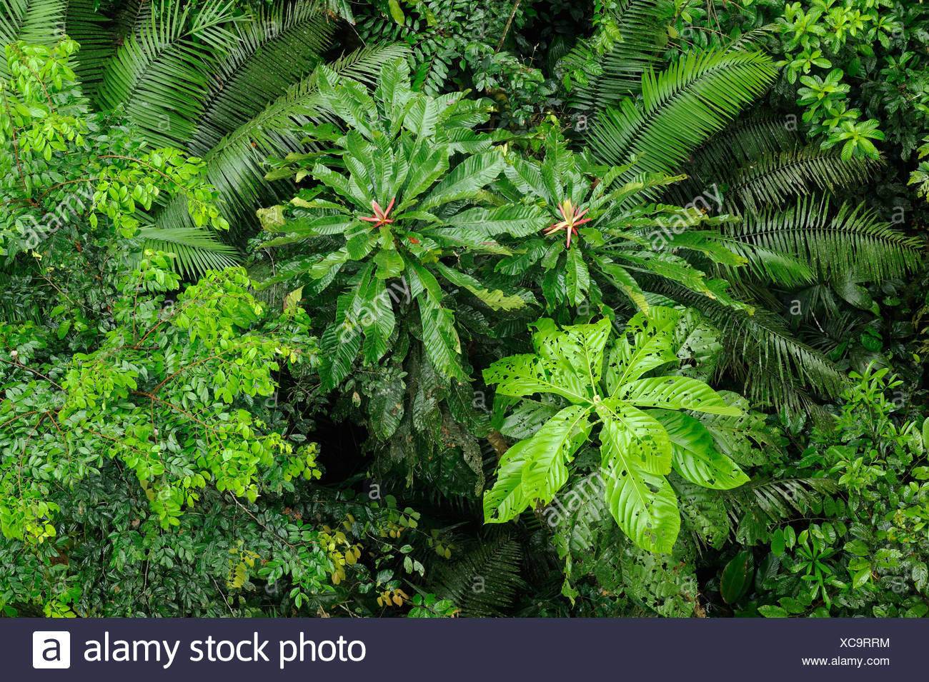 Rain forest from a birds perspective by Rio Napo river, Ecuador, South America - Stock Image