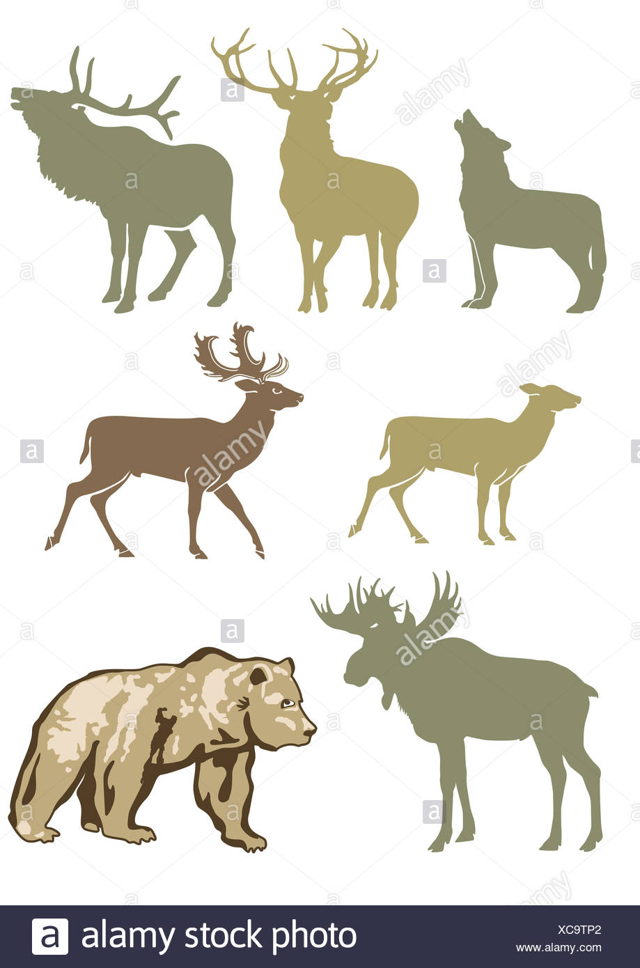 Forest Animals - Stock Image
