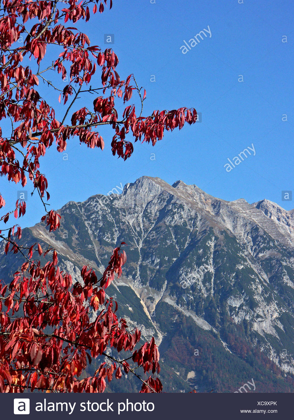 deciduous trees autumnal atmosphere autumn foliage season mountain fall autumn Stock Photo