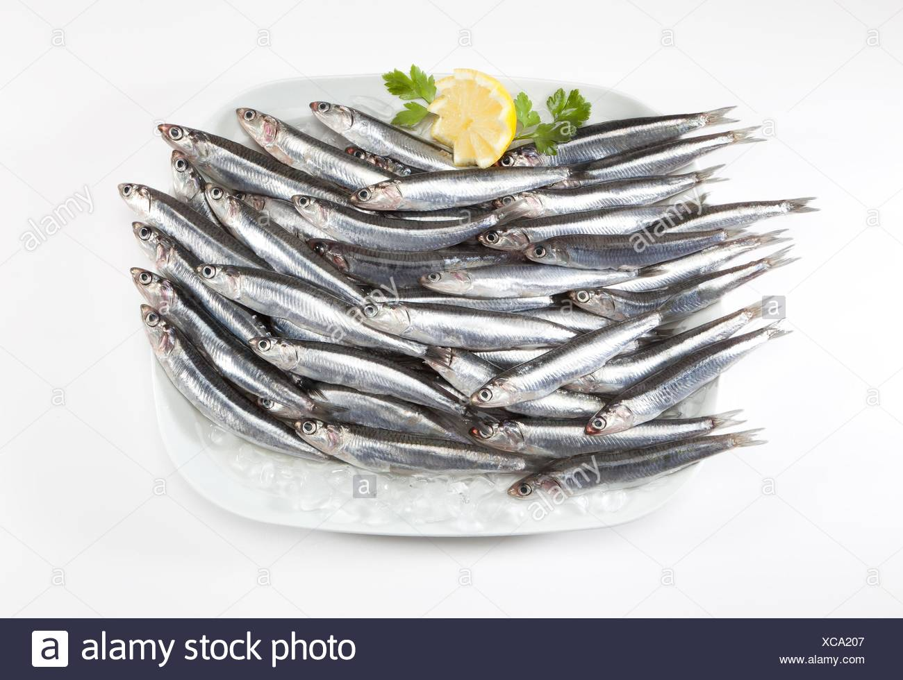 anchovies plate on ice. - Stock Image