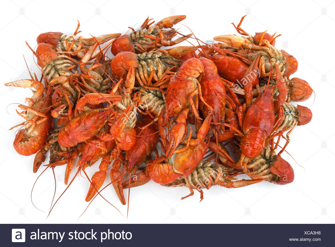 Pile of boiled crawfishes - Stock Image