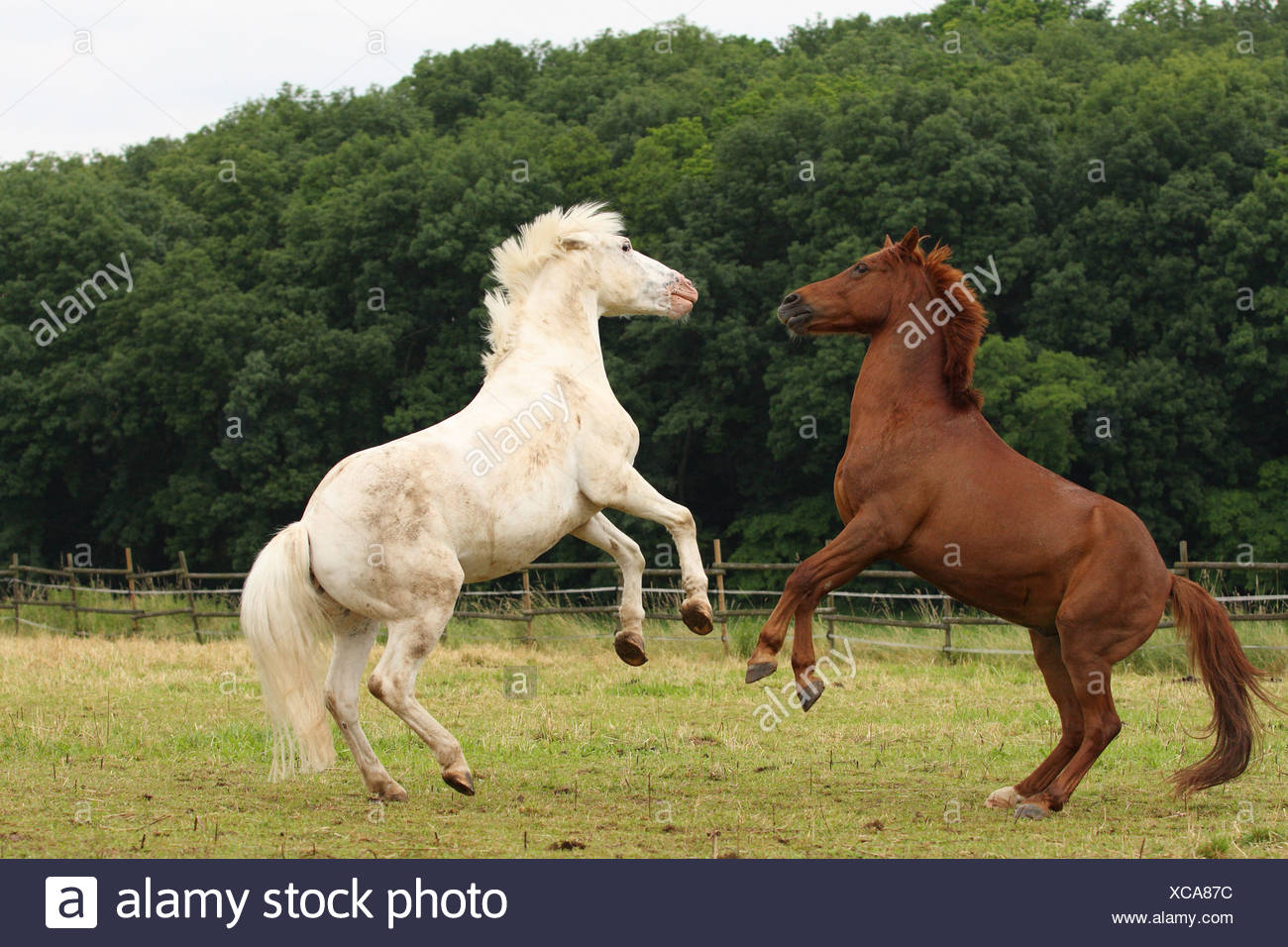 playing horses - Stock Image