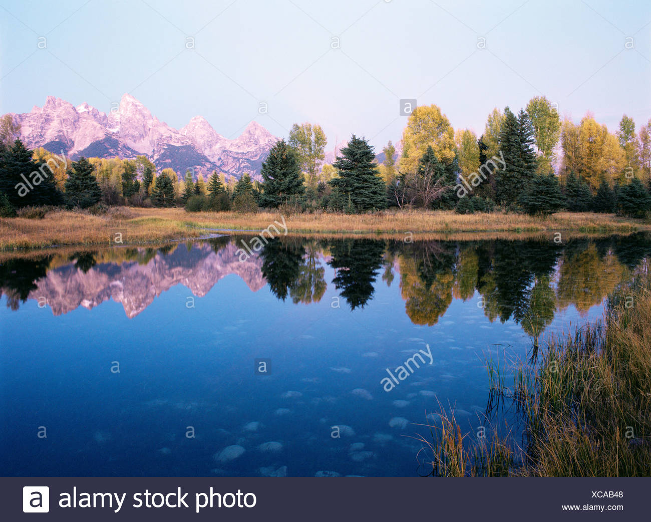 Grand teton reflecting in a beaver pond Stock Photo