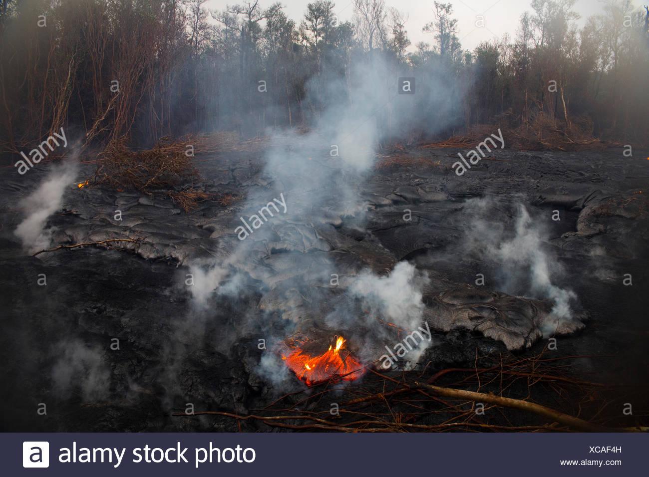 Big Island,destroy,rain forest,Kahaualea Natural aera reserve,reserve,Vulcanoes,National Park,Big Island,USA,Hawaii,Am - Stock Image