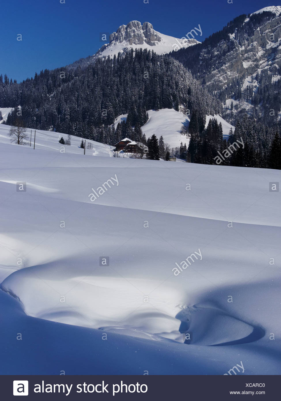 Mountain forest, Böli, Chüblisbüel, Emmental, spruce forest, house, home, court, yard, canton Bern, Kemmeriboden, scenery, natur - Stock Image