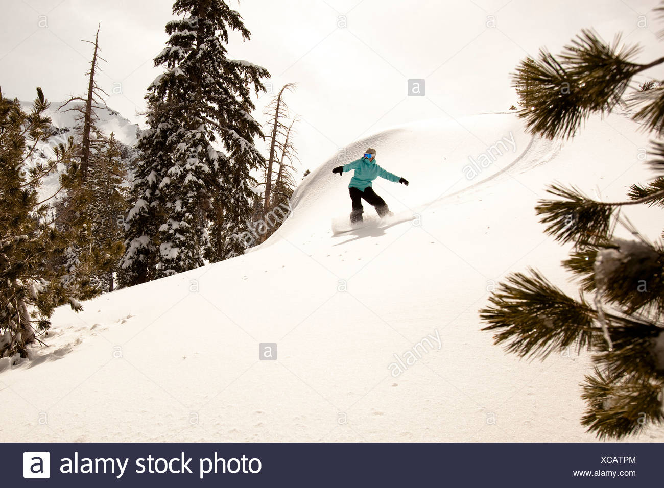 A female snowboarder lays out some fresh tracks while snowboarding in Squaw Valley, California. - Stock Image