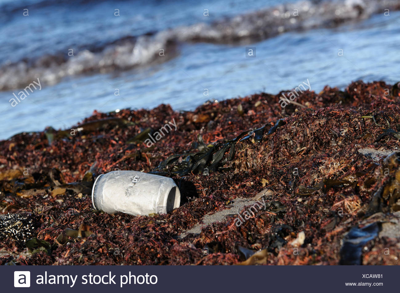 Tin Can On Dirty Beach - Stock Image