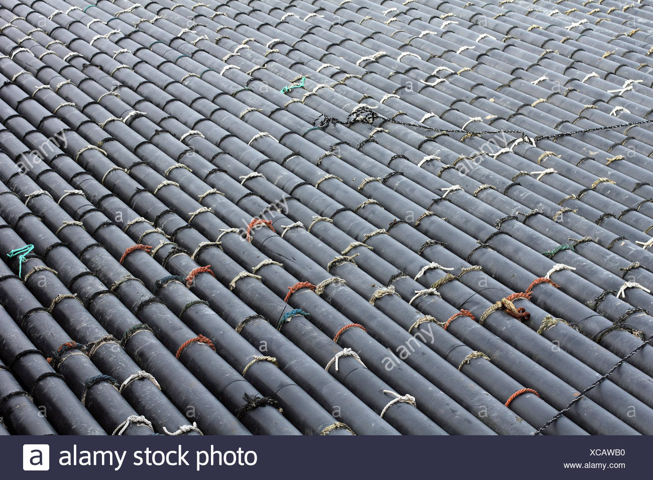Pipes of a mussel seed capturing installation - Stock Image