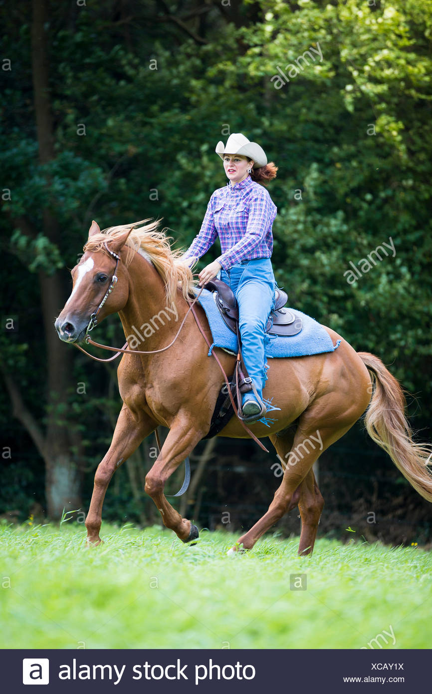 American Quarter Horse Western Rider With Chestnut Gelding Galopping On A Pasture Germany Stock Photo Alamy