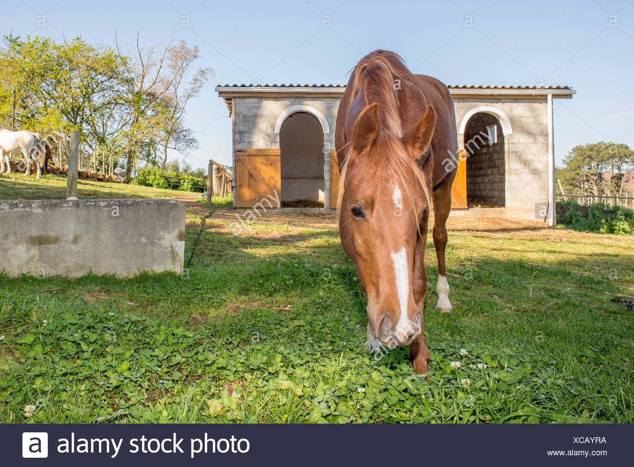 Horse by the Stables - Stock Image