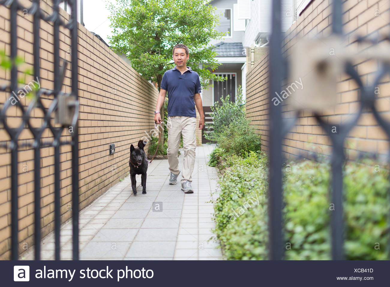 Man walking his pet dog Stock Photo