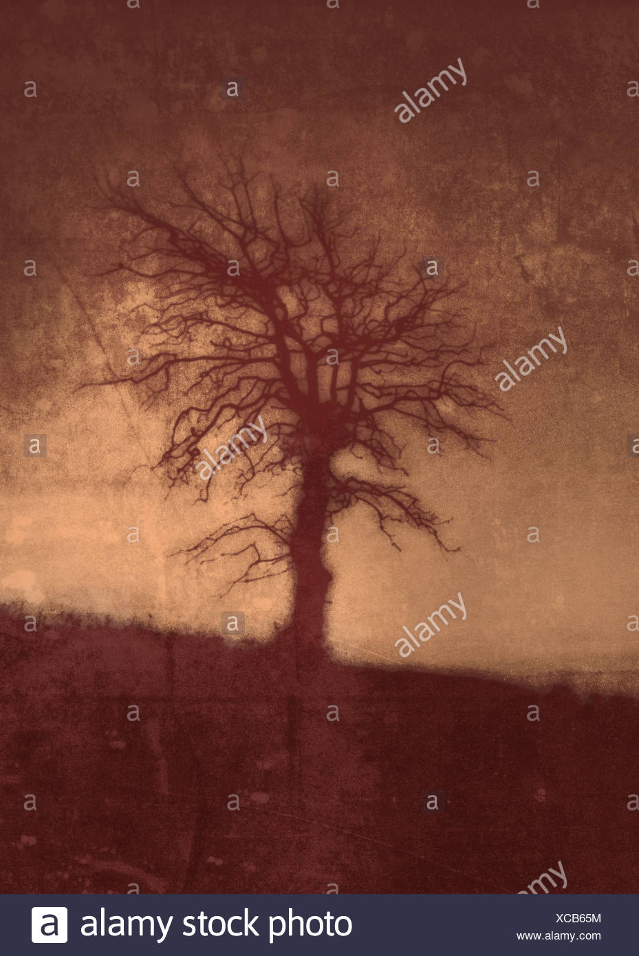 red tree - Stock Image