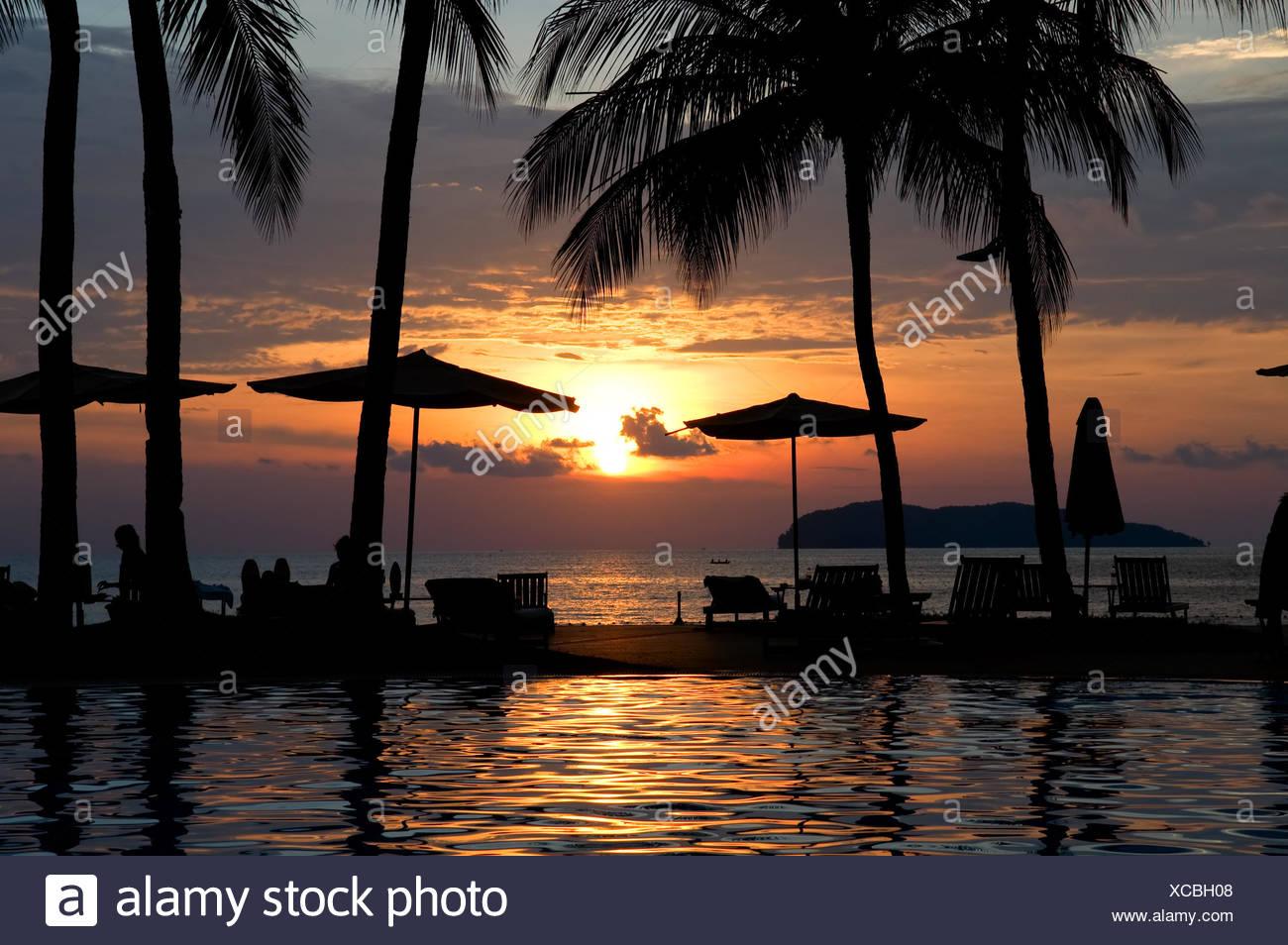 Tree Sunset Reflection Silhouette Palm Resort Shine Shines
