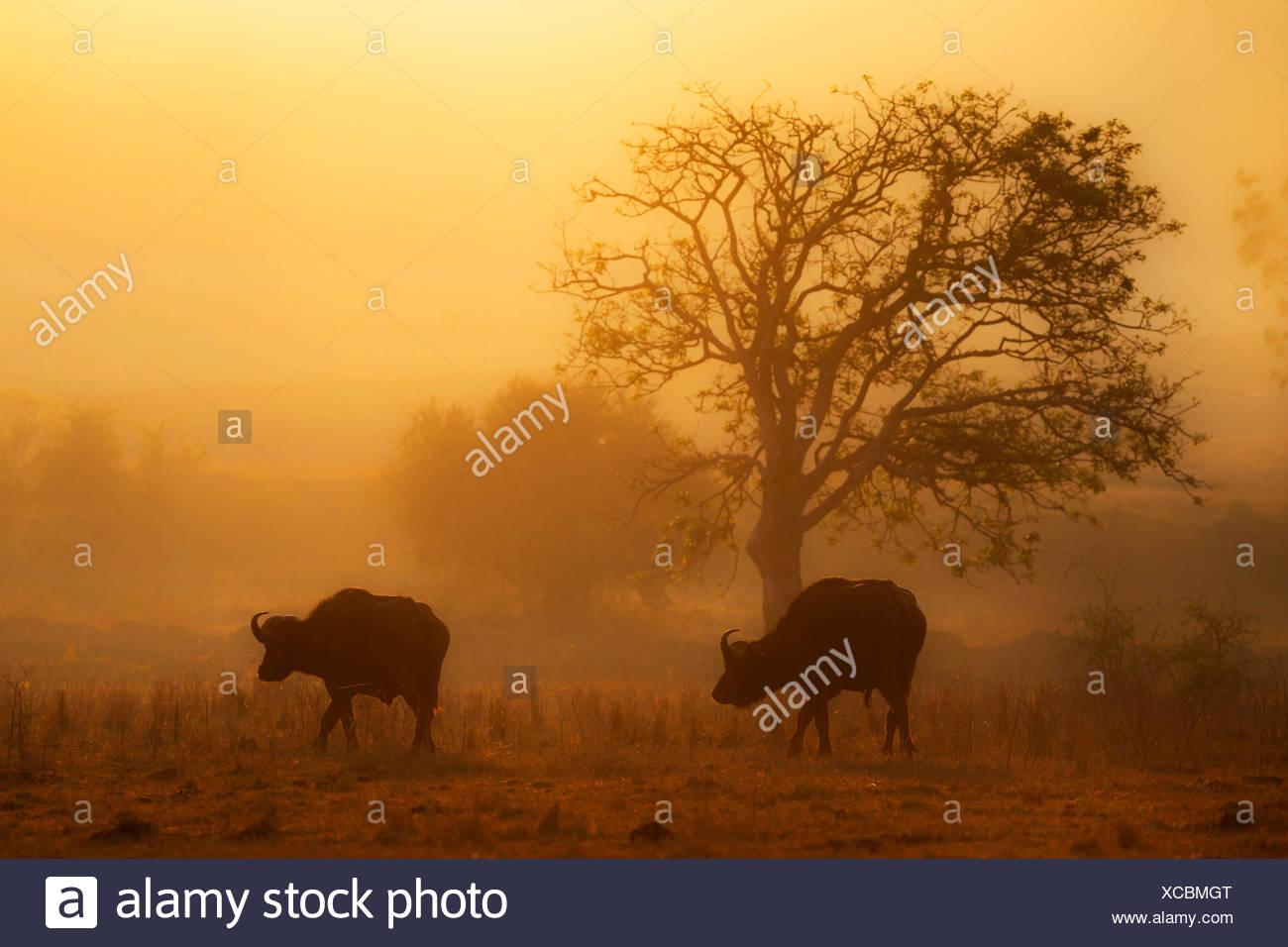 Lake Nakuru, Rift Valley Stock Photo