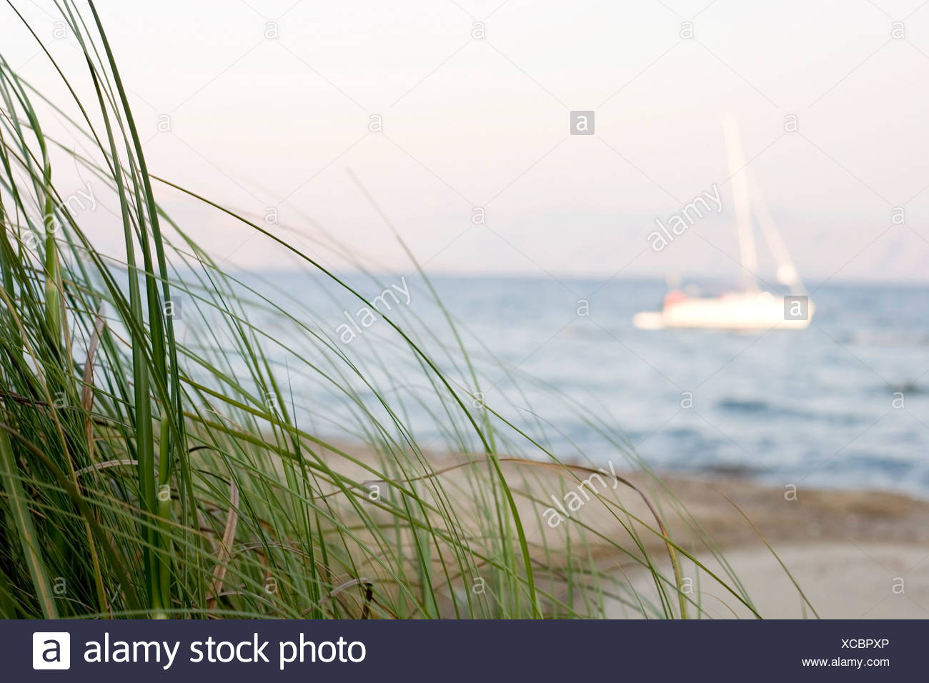 Dune grass on the beach and a yacht in the back - Stock Image