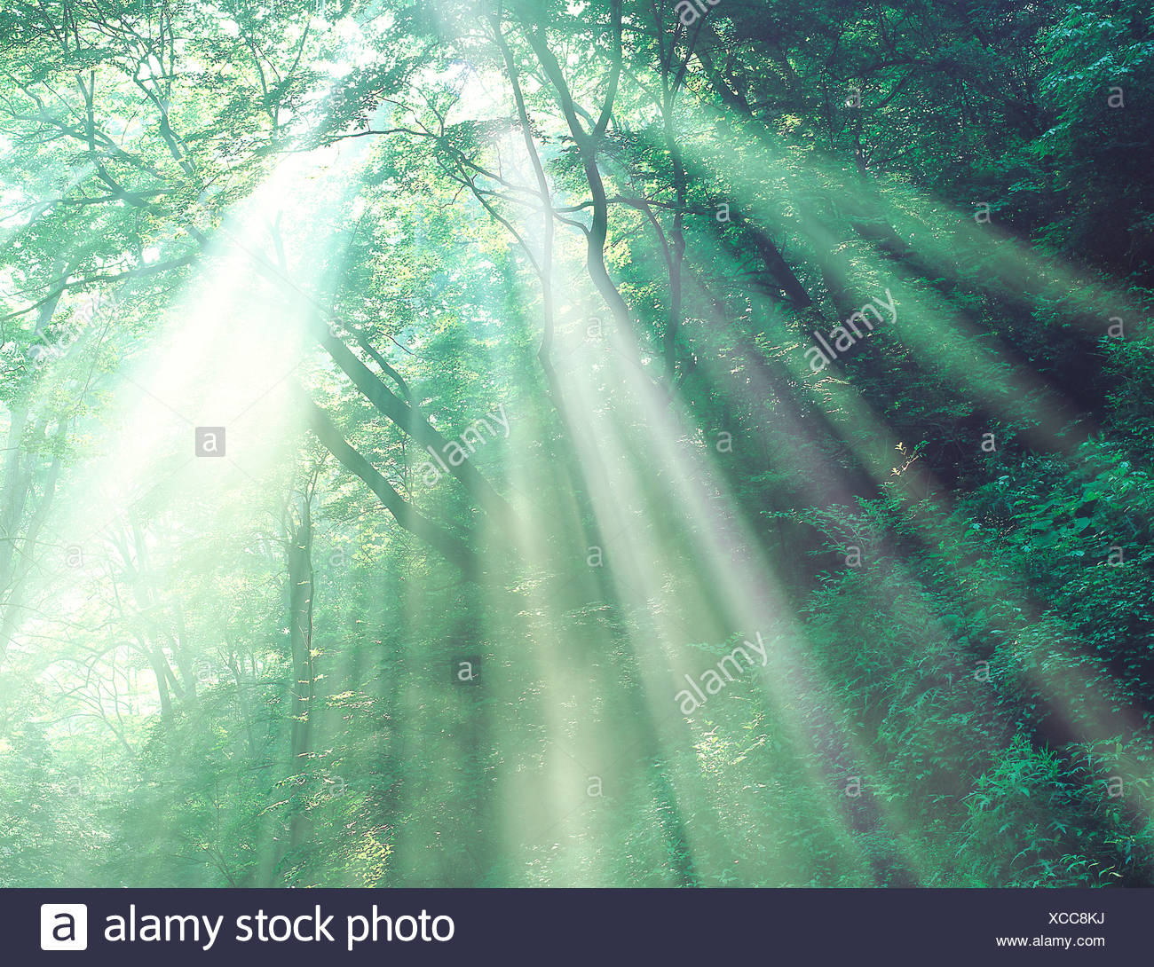 View of sunshine amid trees - Stock Image