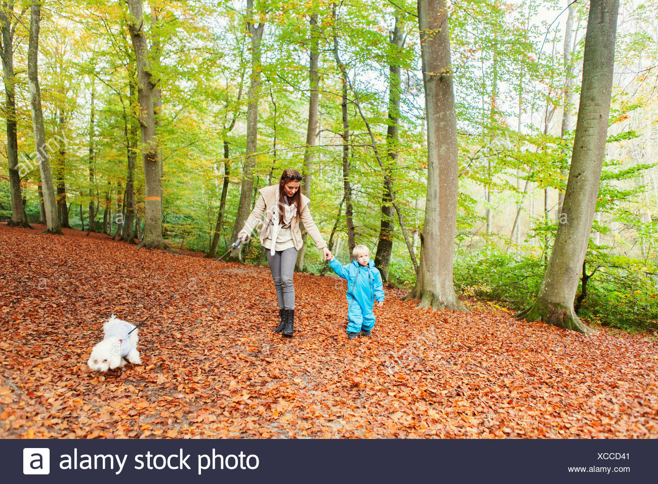 Mother and son walking with dog in forest - Stock Image