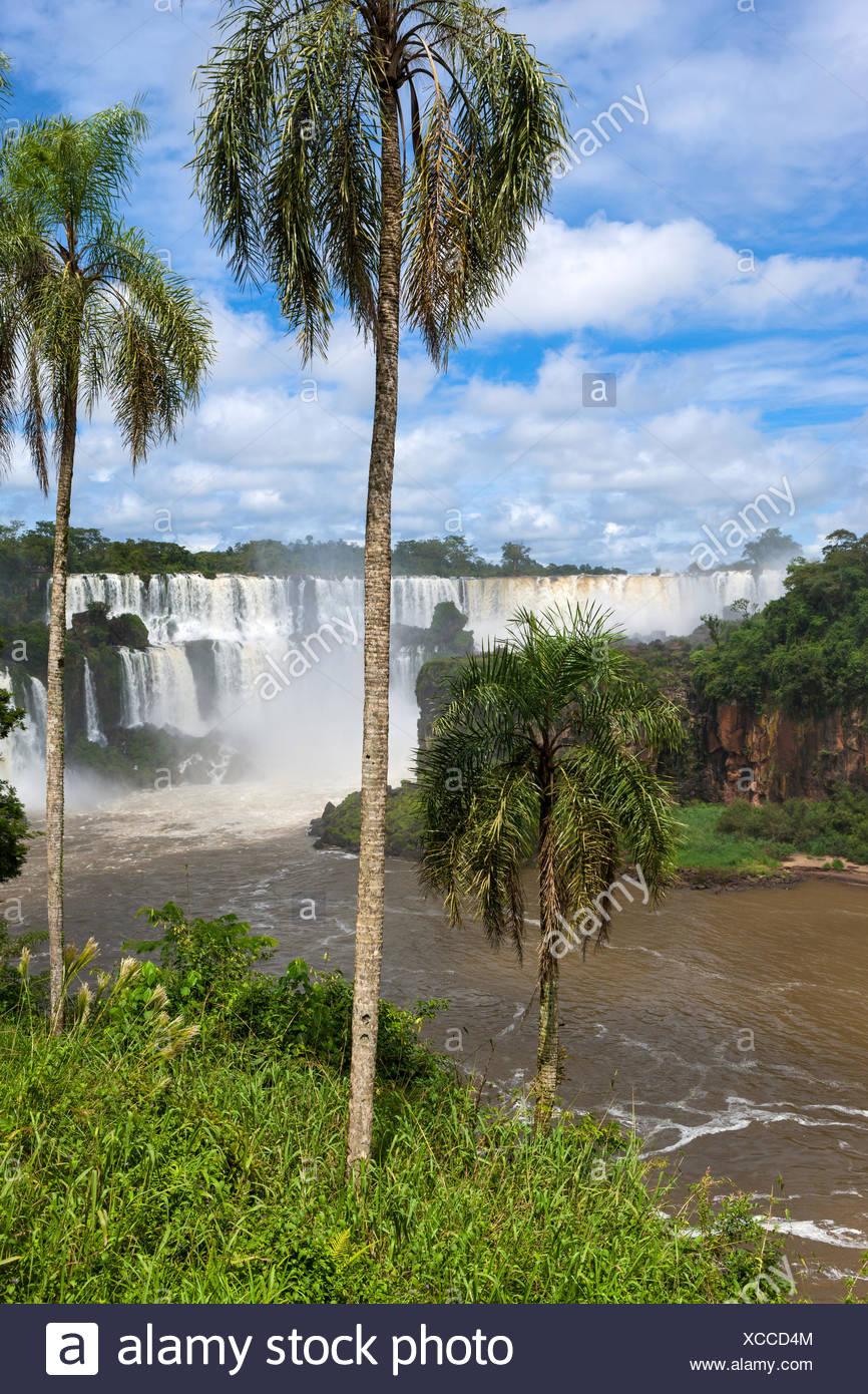 Iguazu falls,Argentina - Stock Image