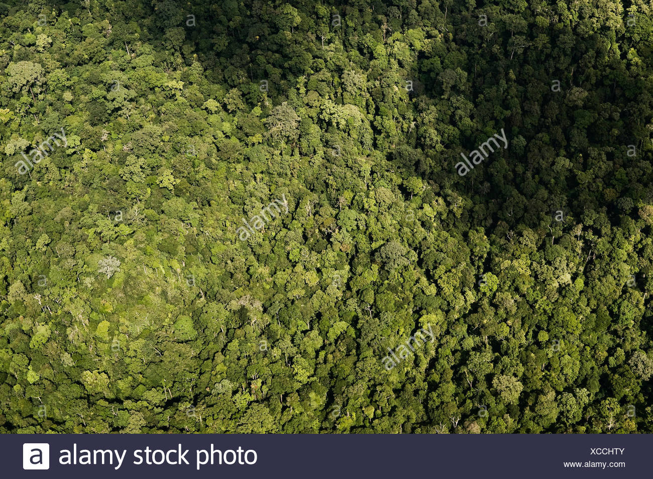 jungle from above - Stock Image