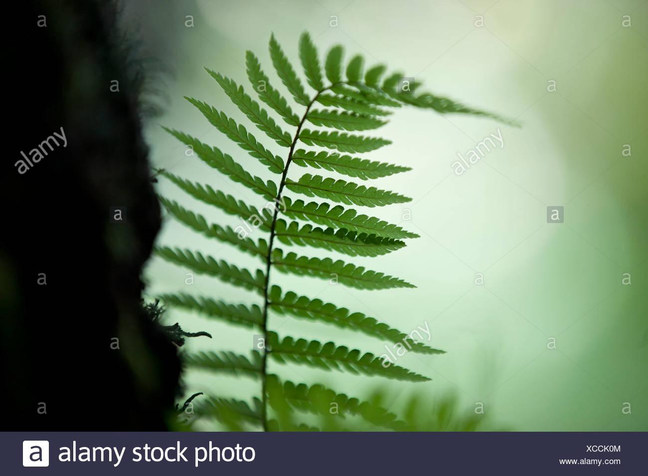 Fern tree leaves - Stock Image